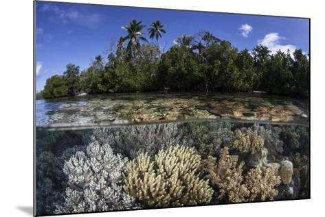 Soft Leather Corals Grow in the Shallow Waters in the Solomon Islands-Stocktrek Images-Mounted Photographic Print