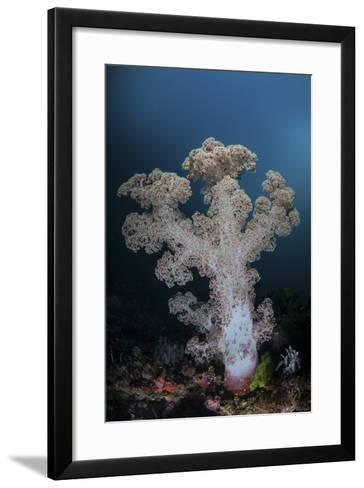 A Soft Coral Colony Grows on a Reef Slope in Indonesia-Stocktrek Images-Framed Art Print