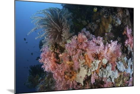 Soft Corals and Other Invertebrates Grow on a Reef in Indonesia-Stocktrek Images-Mounted Photographic Print
