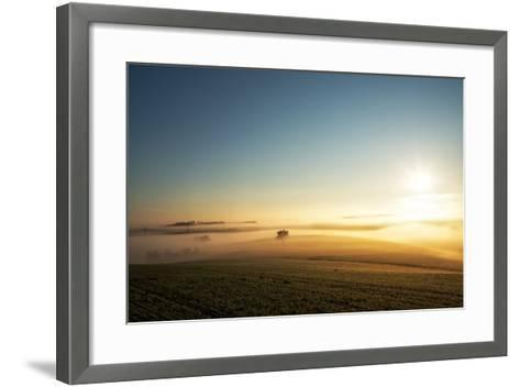 Single Tree in a Stream of Slowly Moving Layers of Mist, Baden-Wurttemberg, Germany, Europe-Andy Brandl-Framed Art Print