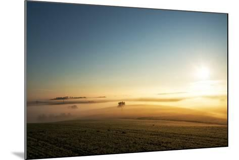 Single Tree in a Stream of Slowly Moving Layers of Mist, Baden-Wurttemberg, Germany, Europe-Andy Brandl-Mounted Photographic Print