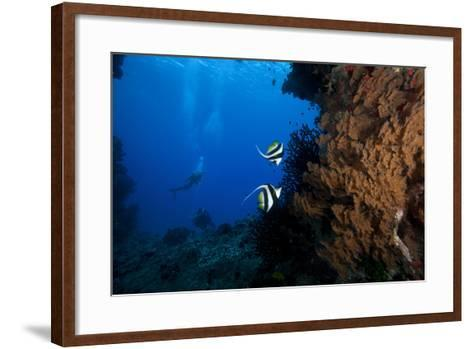 A Pair of Moorish Idols Dart for Cover When Divers Approach-Stocktrek Images-Framed Art Print