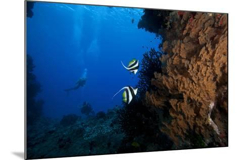 A Pair of Moorish Idols Dart for Cover When Divers Approach-Stocktrek Images-Mounted Photographic Print