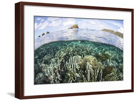 A Beautiful Coral Reef in Raja Ampat, Indonesia-Stocktrek Images-Framed Art Print