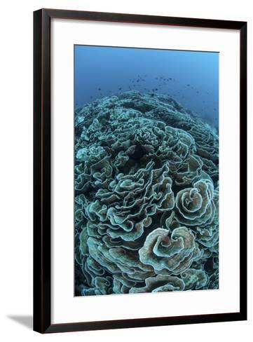 Corals are Beginning to Bleach on a Reef in Indonesia-Stocktrek Images-Framed Art Print