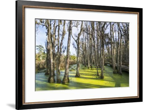 Dead Trees in the Swamps of the Magnolia Plantation Outside Charleston, South Carolina, U.S.A.-Michael Runkel-Framed Art Print