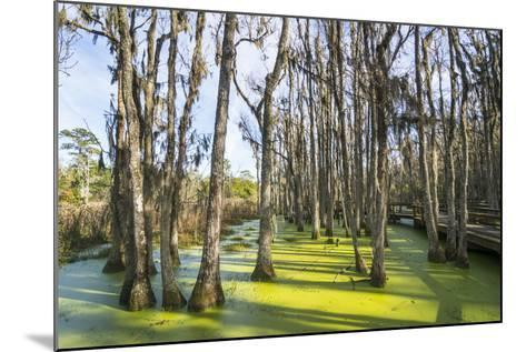 Dead Trees in the Swamps of the Magnolia Plantation Outside Charleston, South Carolina, U.S.A.-Michael Runkel-Mounted Photographic Print