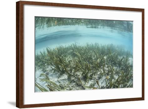 A Sea Grass Meadow Grows in the Shallow Water of Raja Ampat-Stocktrek Images-Framed Art Print
