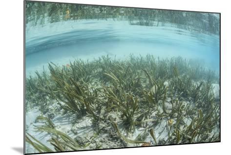A Sea Grass Meadow Grows in the Shallow Water of Raja Ampat-Stocktrek Images-Mounted Photographic Print