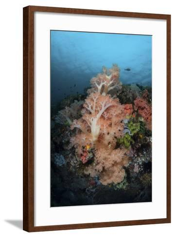 Vibrant Soft Corals Thrive on a Deep Reef in Indonesia-Stocktrek Images-Framed Art Print