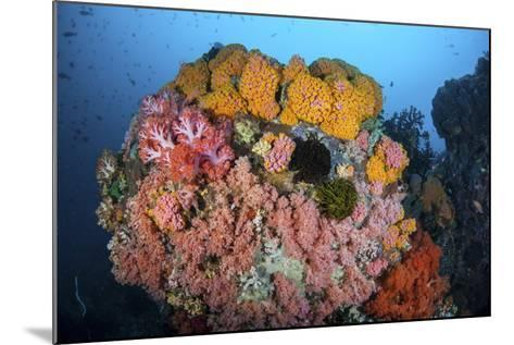 Soft Corals, Sponges, and Other Invertebrates on a Reef in Indonesia-Stocktrek Images-Mounted Photographic Print