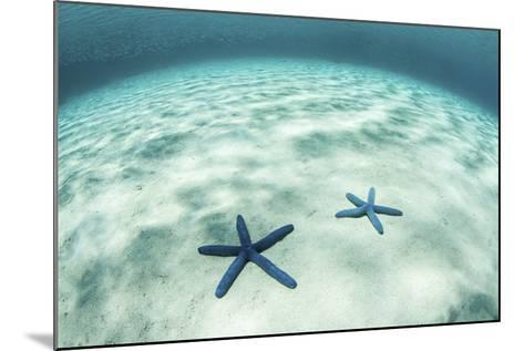 Starfish on a Brightly Lit Seafloor in the Tropical Pacific Ocean-Stocktrek Images-Mounted Photographic Print