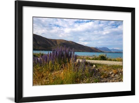 Lupins, Lake Tekapo, South Canterbury, South Island, New Zealand, Pacific-Suzan Moore-Framed Art Print