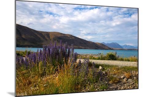 Lupins, Lake Tekapo, South Canterbury, South Island, New Zealand, Pacific-Suzan Moore-Mounted Photographic Print