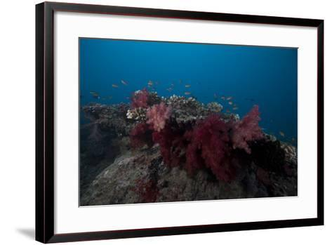 Soft Coral on a Fijian Reef-Stocktrek Images-Framed Art Print