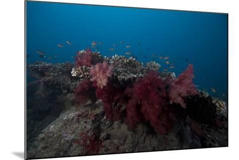Soft Coral on a Fijian Reef-Stocktrek Images-Mounted Photographic Print