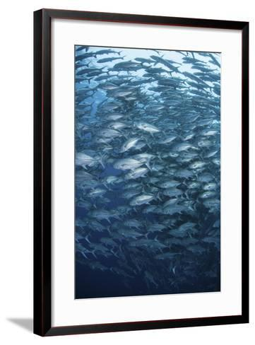 A Massive School of Bigeye Trevally Near Cocos Island, Costa Rica-Stocktrek Images-Framed Art Print