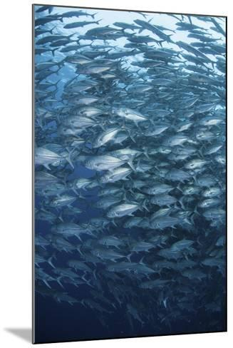 A Massive School of Bigeye Trevally Near Cocos Island, Costa Rica-Stocktrek Images-Mounted Photographic Print