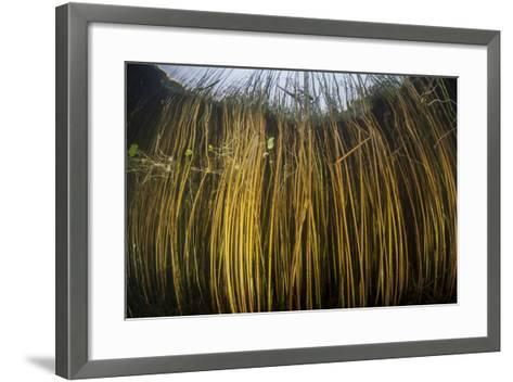 Colorful Reeds Grow to the Surface Along the Edge of a Freshwater Lake-Stocktrek Images-Framed Art Print