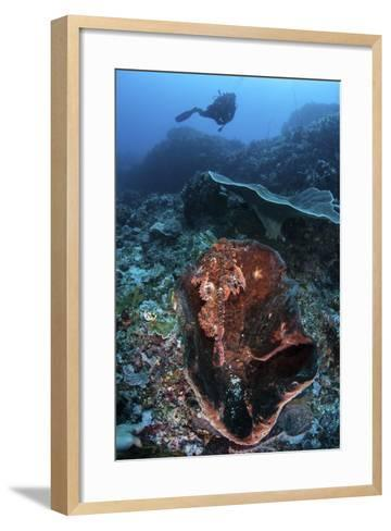 A Scorpionfish Lays on a Large Sponge on a Coral Reef-Stocktrek Images-Framed Art Print