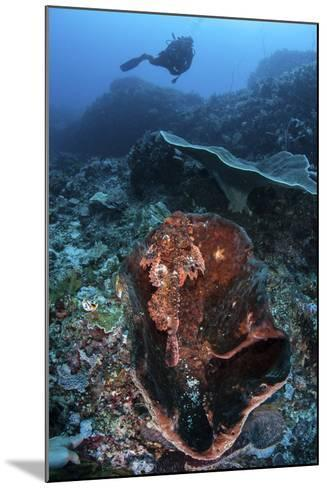 A Scorpionfish Lays on a Large Sponge on a Coral Reef-Stocktrek Images-Mounted Photographic Print