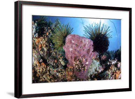 Crinoids Cling to a Large Sponge on a Healthy Coral Reef-Stocktrek Images-Framed Art Print