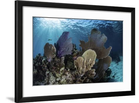 A Colorful Set of Gorgonians on a Diverse Reef in the Caribbean Sea-Stocktrek Images-Framed Art Print