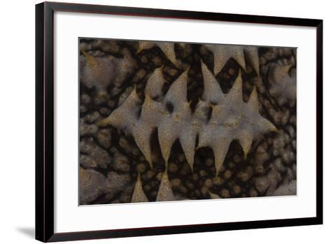 Close-Up Pattern of a Giant Sea Cucumber-Stocktrek Images-Framed Art Print