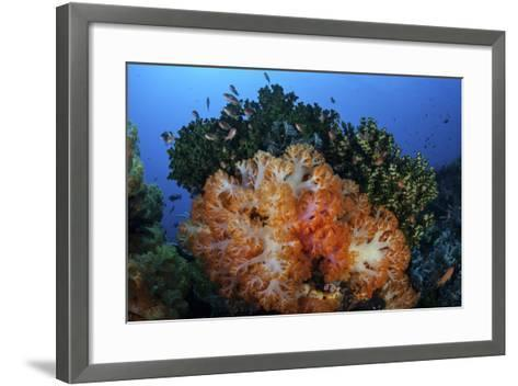 A Beautiful Cluster of Soft Coral Colonies on a Coral Reef in Indonesia-Stocktrek Images-Framed Art Print