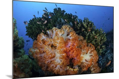 A Beautiful Cluster of Soft Coral Colonies on a Coral Reef in Indonesia-Stocktrek Images-Mounted Photographic Print