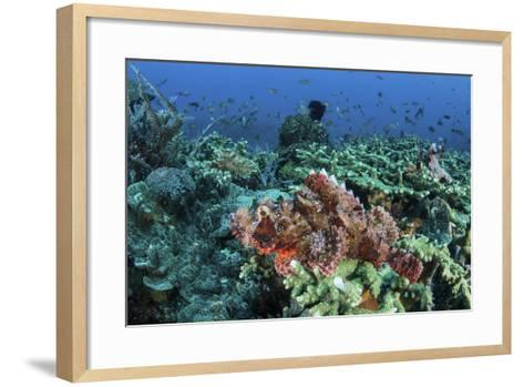 A Venomous Scorpionfish on a Coral Reef in Komodo National Park, Indonesia-Stocktrek Images-Framed Art Print