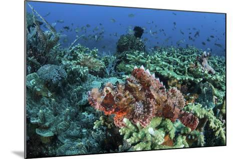 A Venomous Scorpionfish on a Coral Reef in Komodo National Park, Indonesia-Stocktrek Images-Mounted Photographic Print