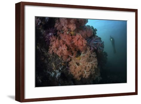 Soft Corals and Invertebrates Grow on a Deep Reef in Indonesia-Stocktrek Images-Framed Art Print