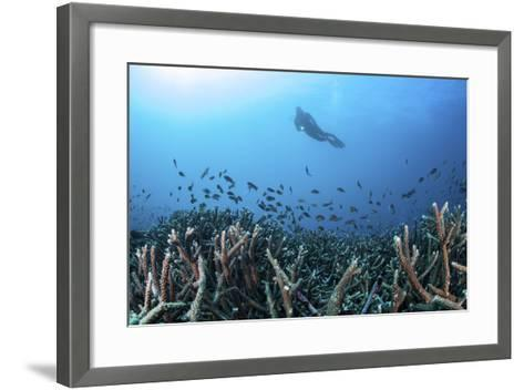 A Diver Swims Above a Healthy Coral Reef in Komodo National Park, Indonesia-Stocktrek Images-Framed Art Print