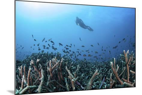 A Diver Swims Above a Healthy Coral Reef in Komodo National Park, Indonesia-Stocktrek Images-Mounted Photographic Print