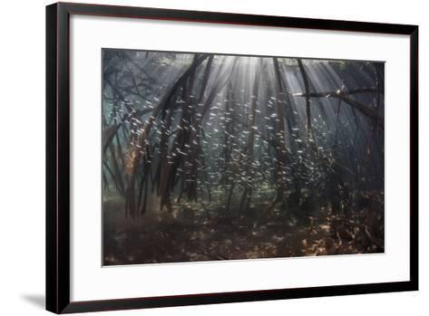 Beams of Sunlight Filter Among the Prop Roots of a Mangrove Forest-Stocktrek Images-Framed Art Print