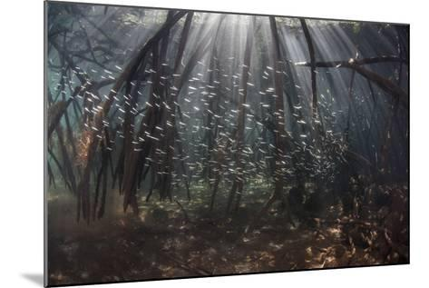 Beams of Sunlight Filter Among the Prop Roots of a Mangrove Forest-Stocktrek Images-Mounted Photographic Print