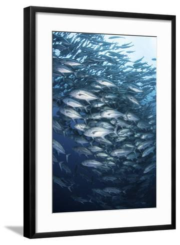 Schooling Bigeye Jacks Swim in the Depths of the Pacific Ocean-Stocktrek Images-Framed Art Print