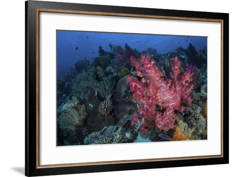 A Beautiful Soft Coral Colony on a Coral Reef in Indonesia-Stocktrek Images-Framed Art Print
