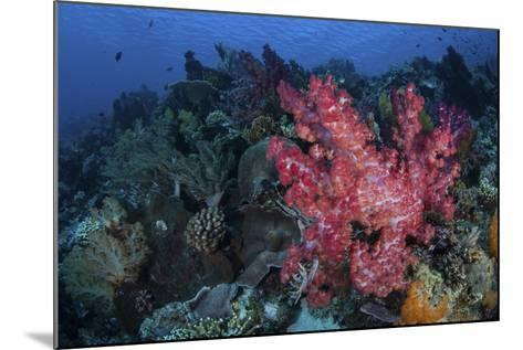 A Beautiful Soft Coral Colony on a Coral Reef in Indonesia-Stocktrek Images-Mounted Photographic Print