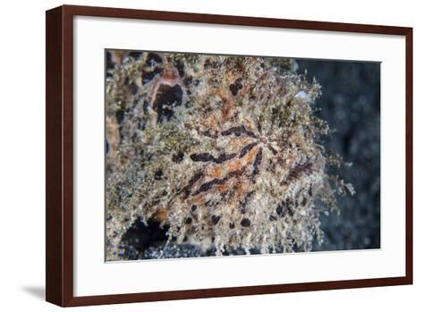 A Hairy Frogfish Waits to Ambush Prey on a Reef-Stocktrek Images-Framed Art Print