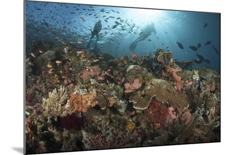 Diver Looks on at Sponges, Soft Corals and Crinoids in a Colorful Komodo Seascape-Stocktrek Images-Mounted Photographic Print