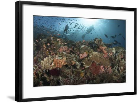 Diver Looks on at Sponges, Soft Corals and Crinoids in a Colorful Komodo Seascape-Stocktrek Images-Framed Art Print