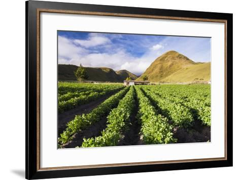 Farmland at the Base of Illiniza Norte Volcano, Pichincha Province, Ecuador, South America-Matthew Williams-Ellis-Framed Art Print
