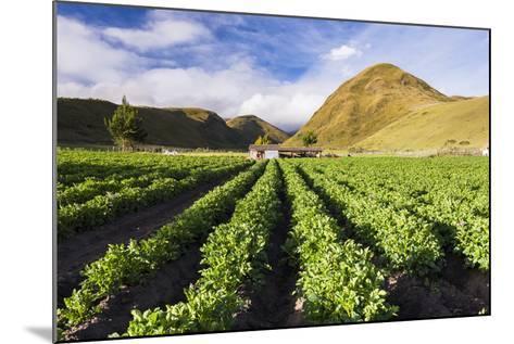 Farmland at the Base of Illiniza Norte Volcano, Pichincha Province, Ecuador, South America-Matthew Williams-Ellis-Mounted Photographic Print