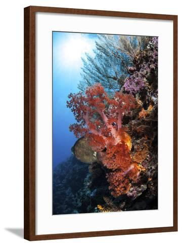 Soft Corals and Other Invertebrates Grow on a Reef in Indonesia-Stocktrek Images-Framed Art Print
