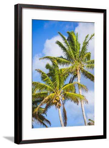 Palm Tree, Muri, Rarotonga, Cook Islands, South Pacific, Pacific-Matthew Williams-Ellis-Framed Art Print