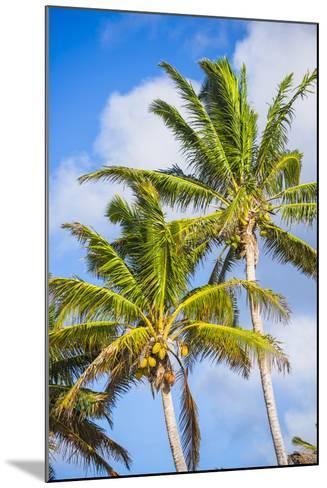 Palm Tree, Muri, Rarotonga, Cook Islands, South Pacific, Pacific-Matthew Williams-Ellis-Mounted Photographic Print