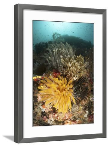 A Colorful Komodo Seascape with Crinoids, Indonesia-Stocktrek Images-Framed Art Print