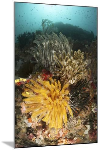 A Colorful Komodo Seascape with Crinoids, Indonesia-Stocktrek Images-Mounted Photographic Print